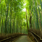 arashiyama-and-sagano-morning-walking-tour-in-kyoto-153141